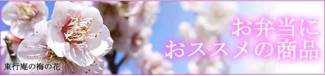 2016お花見特集