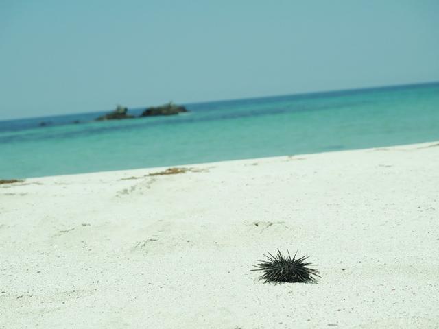 10角島海岸、うに.JPG
